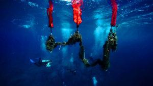 Καθαρίζοντας το Βυθό Aegean Rebreath